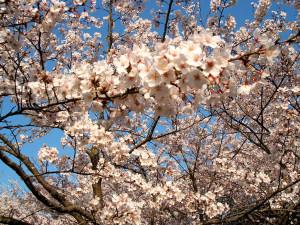 「続・春の歌」