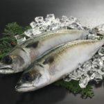 「関鯖のお刺身」