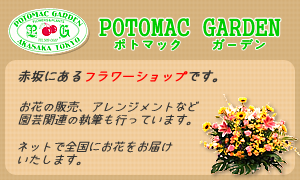 赤坂のお花屋さん「ポトマックガーデン」